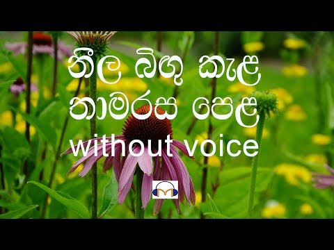 Neela Bingu Kela Karaoke (without voice) නීල බිඟු කැල