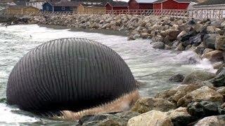 'Ölü balina her an patlayabilir' - BBC TÜRKÇE