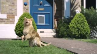 Неожиданная реклама от сотового оператора O2  Будь немного собакой