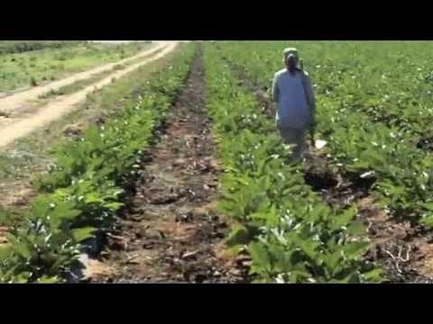 I Love Farm Jobs (farms work in Australia)