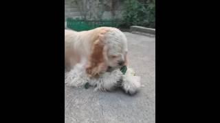 Собачья диета