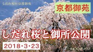 京都御苑の枝垂れ桜と京都御所 2018 [4K]