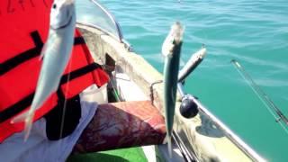 Рыбалка 1 и 2 ! Первая селедка со своей лодки !(Этот ролик обработан в Видеоредакторе YouTube (http://www.youtube.com/editor), 2016-05-03T14:37:22.000Z)