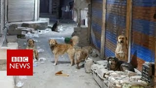 Tracking down India's killer dogs - BBC News