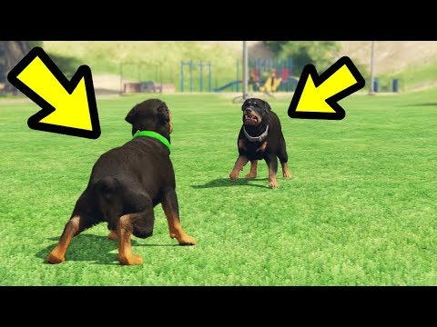 GTA 5 - Chop vs. Dog! (Who Wins?)