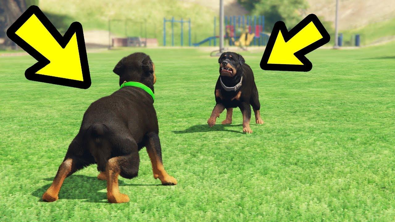 Gta  Chop Vs Dog Who Wins