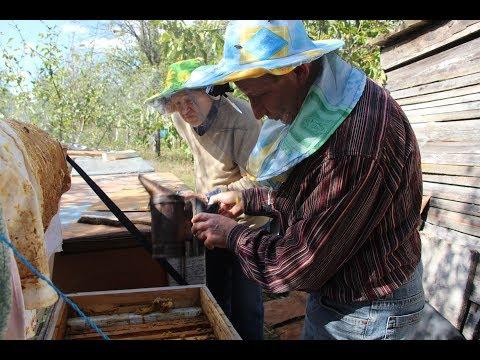 Собираем пчелиное гнездо в зиму с начинающим пчеловодом