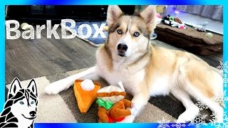 ALL THE TOYS BELONG TO SHELBY   Thanksgiving Bark Box Unboxing  with Dog Commentary
