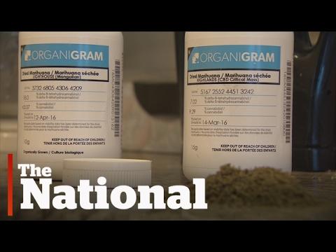 Tainted pot recall triggers Health Canada spot checks