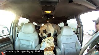 CA / AZ US Border Patrol Checkpoint searched our vehicle with DOG! | MicBergsma