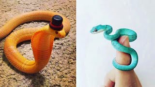 Snakes Can Be Soo Cute Too - Funny Snake Videos 2021 #33