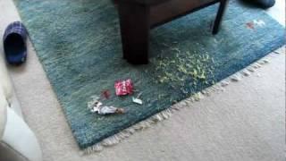 ちょっと出かけ戻ってみると お昼のラーメンが3人前 泥棒に食い荒らされ...