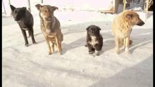 Документальный фильм Собачья жизнь Мельникова Анастасия