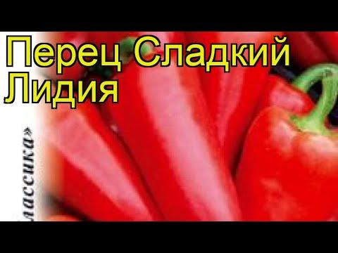 Перец сладкий Лидия. Краткий обзор, описание характеристик, где купить семена cápsicum ánnuum | описание | сладкий | краткий | перец | обзор | лидия | лиди | psicum | nnuum | c