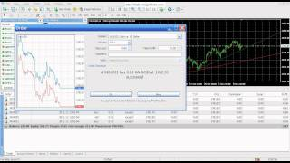 SPREAD AT EASY FOREX BROKER FIXED 5 PIP.avi