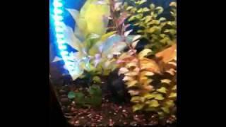 underwater fish tank leds