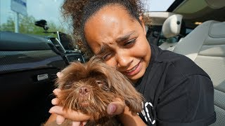 TIANA CRIED!! TIANA'S PUPPY IS COMING HOME