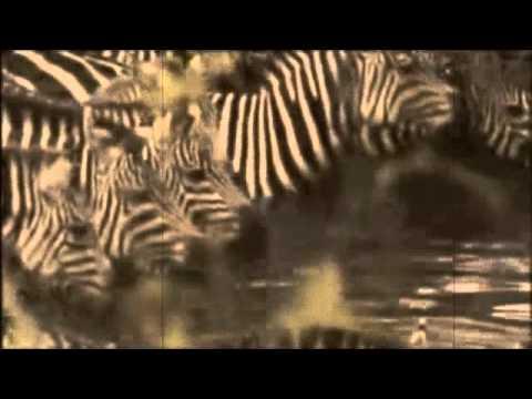 Master Kev & Tony Loreto Wild Kingdom [Jamsteady Remix]