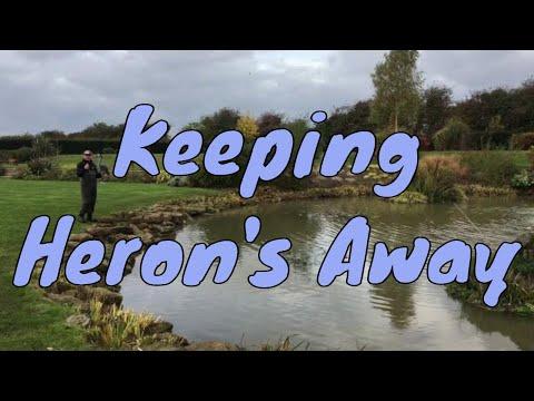 How Do I Keep A Heron Away From My Pond? Keep Heron Away