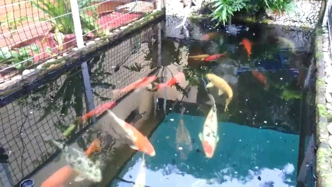 Koi pond mauritius youtube for How deep should a koi pond be