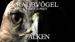 Raubvögel - Falken (2012) [Dokumentation] | Film (deutsch)