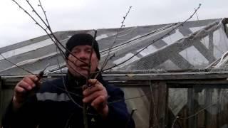 Урок 8.Потрясающие уроки обрезки сада.! Все по классической науке.ПОДПИШИСЬ!