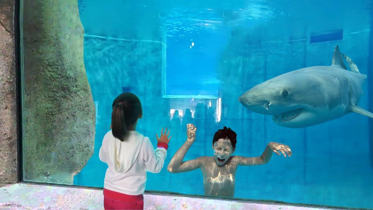 her brother got stuck in shark tank... (BIG MISTAKE)