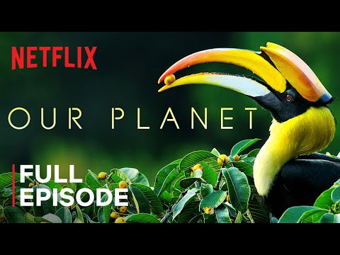 our-planet-|-forests-|-full-episode-|-netflix