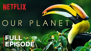 Our Planet | Forests | Full Episode | Netflix