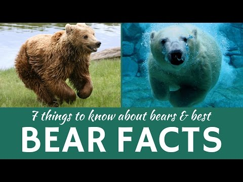 Bears: 7 Facts about Wild Predators (Grizzly, Brown and Polar Bear)