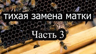 Пасека #29 Как использовать маточники тихой замены? Тихой Замена. Пчеловодство вывод матоk