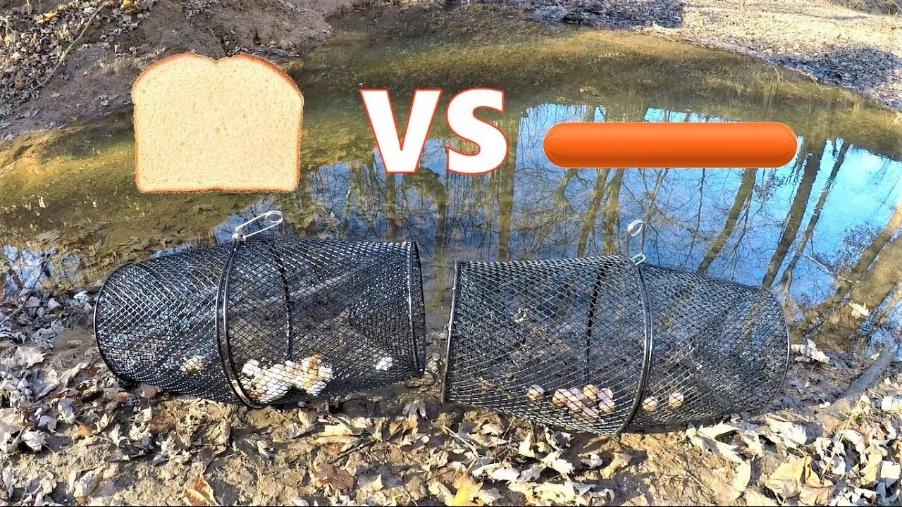 Best Minnow Trap Bait Bread Vs Hot Dog Which Catches More