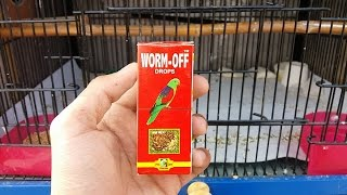 Best Deworming Medicine For Budgies | Budgies Info Lahore | Urdu/Hindi
