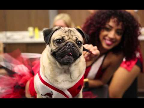 Doug The Pug - Special Guest at a Chicago Bulls Game