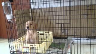 犬のしつけ教室を静岡県浜松市で行っているペットのブリーダーワンブー...