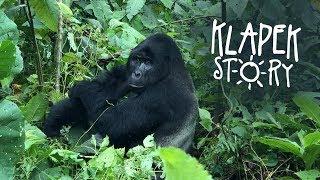 #9 Klapek Story w Ugandzie: Podziwiamy goryle górskie