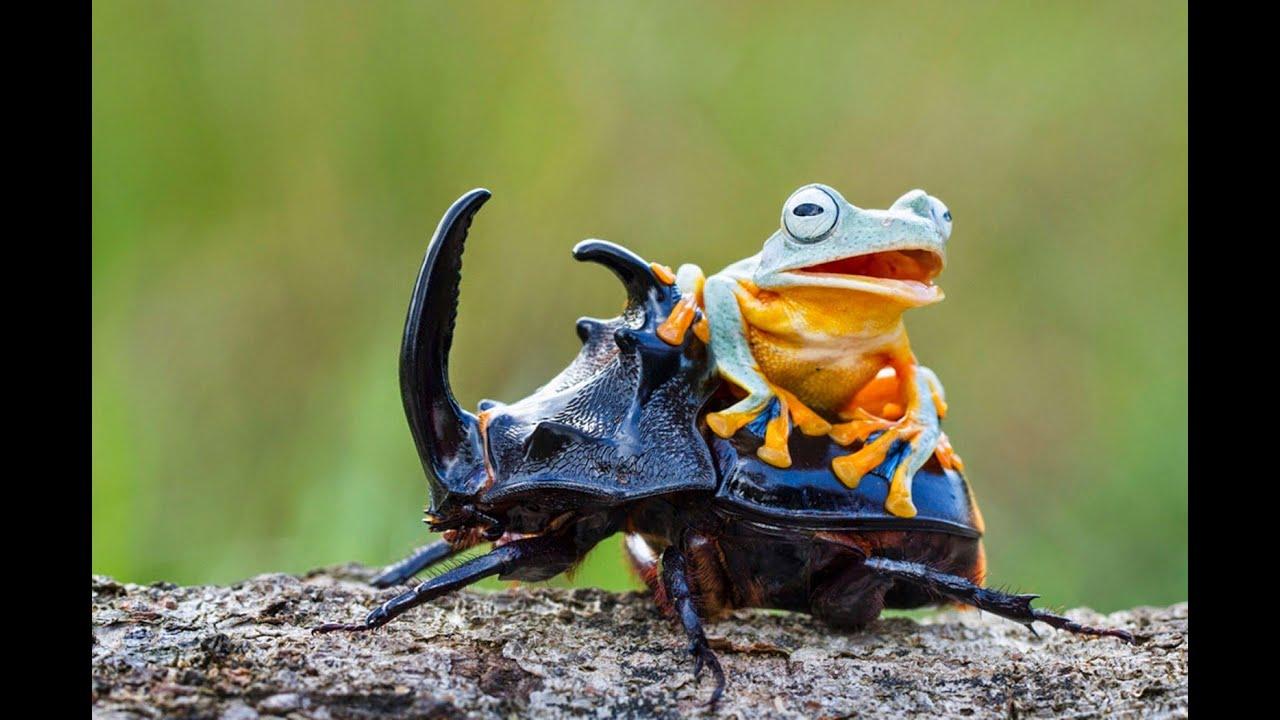 Cамые необычные животные # Топ самых необычных животных мира
