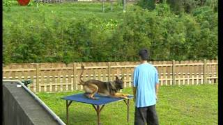 Dog Training, Hk K9 Club