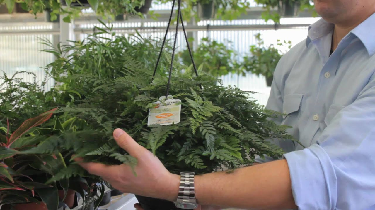 Exotic Angel Plants How To Choose The Best Indoor Plant Youtube