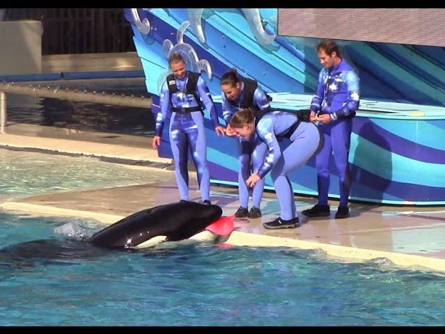 One Ocean Full Show At Seaworld San Diego On Kalia S 10th Birthday 12 21 14 Youtube