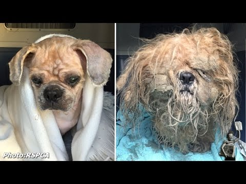 RSPCA rescues dog whose fur was so overgrown he didn't know where he was