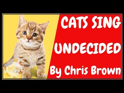 Cats Sing Undecided by Chris Brown | Cats Singing Song