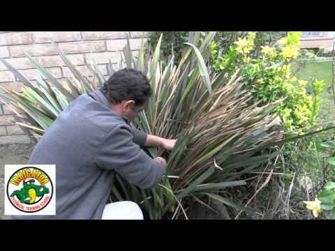 How to Trim and Maintain a Flax Plants