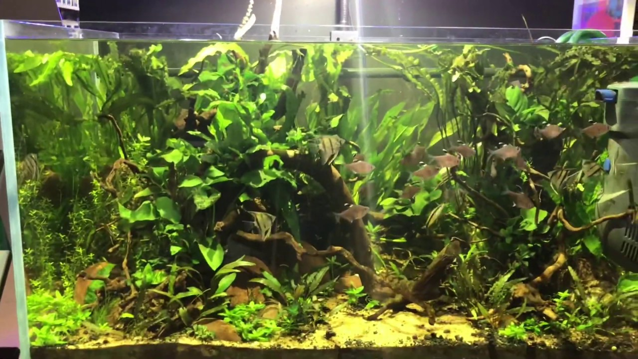 Biotope Style Aquascape Planted tank update - YouTube