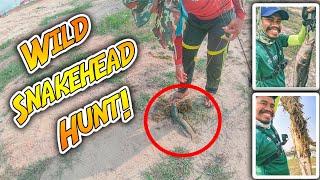 តាមបបក់ឆ្តោរដល់កំពង់សោម | Wild Snakehead Hunting In Sihanouk Ville, Cambodia | Fly FIshing Vlog #04
