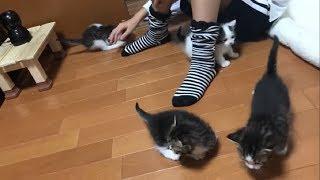 かわいい子猫たちが一斉に散歩すると・・・