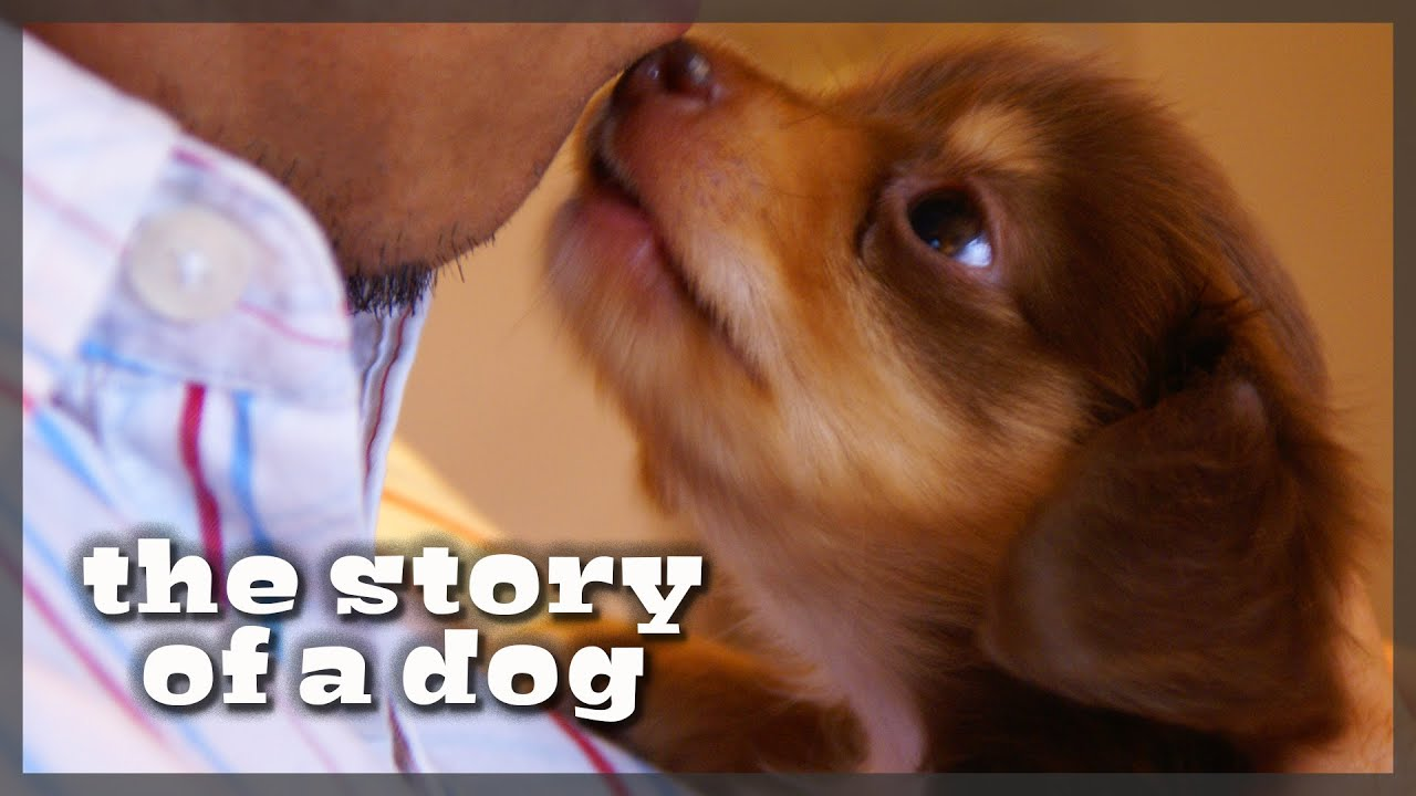 The Story of Justin, the Sweetest Dog in the World