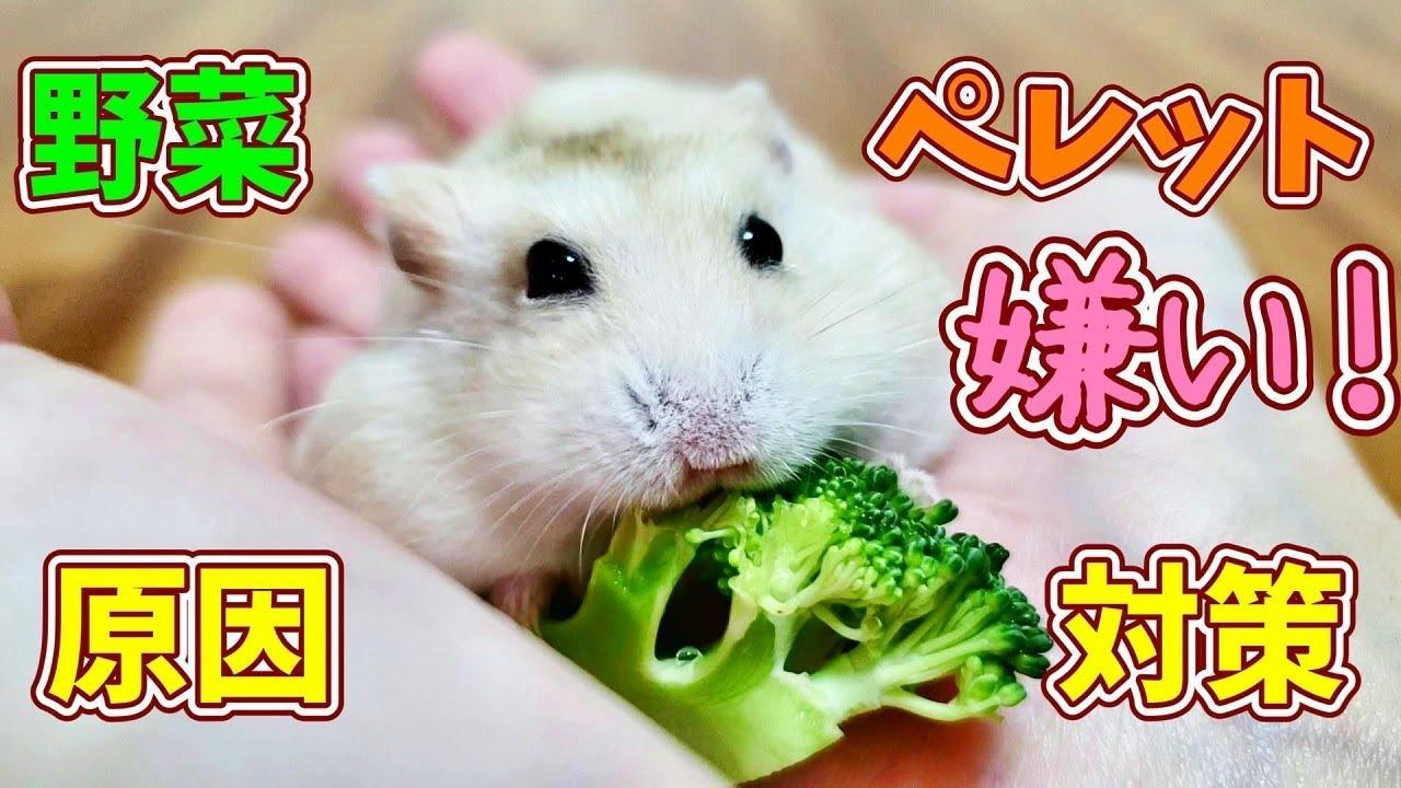 に 野菜 て ハムスター あげ いい