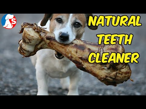 how-to-clean-my-dog-teeth-naturally