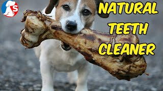 How To Clean My Dog Teeth Naturally